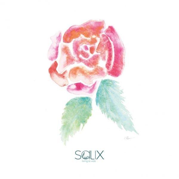 Acuarela de una rosa - ilustración de Salix